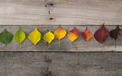 How to Find Joy When the Seasons Change